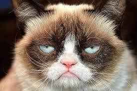 Grumpy Cat supports Net Neutrality.